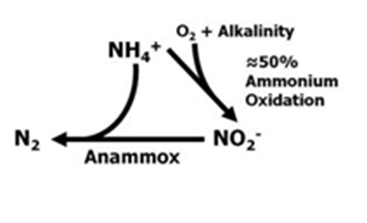 Anammox.png