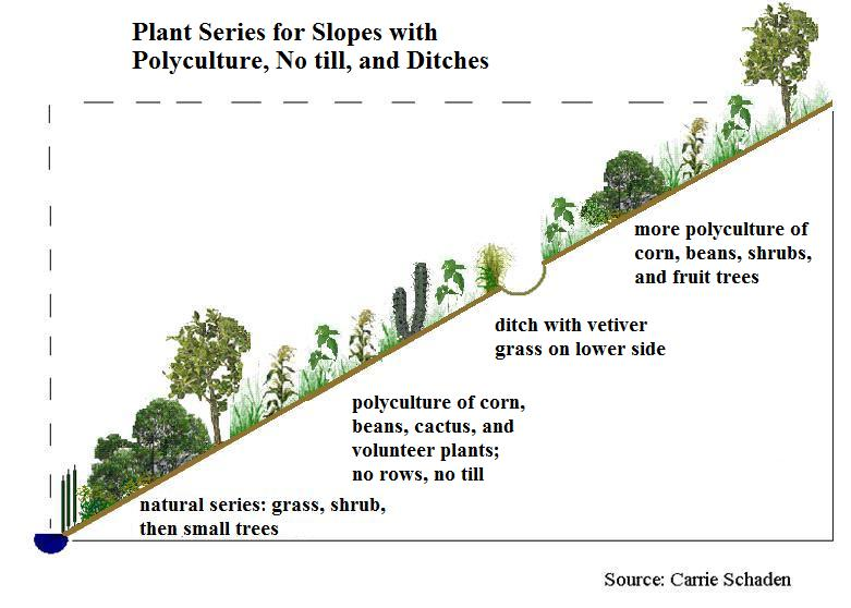 Plant Series polyculture notill ditches.jpg