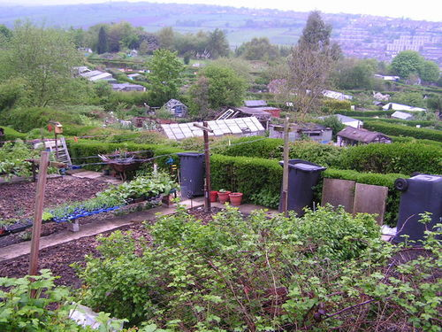 Allotments - geograph.org.uk Sheffield.jpg